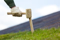 Fixing rolled sod grass turf on soil with wood stick Royalty Free Stock Photo