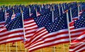 Flags in a field flying to remember americans killed iraq Stock Photography
