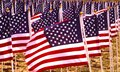 Flags in a field flying to remember americans killed iraq Royalty Free Stock Photo