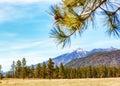 Flagstaff Arizona Mountains and Pine Trees Royalty Free Stock Photo