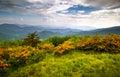 Plameň kvety modrý hrebeň hory