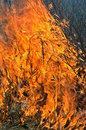 Flame of brushfire 10 Royalty Free Stock Photo