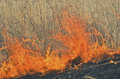 Flame of brushfire 27 Royalty Free Stock Photo