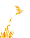 Flame dove flying from yellow fire isolated on white