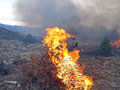 Flame wildland fire fighters use prescribed fire to manage rangeland vegetation Royalty Free Stock Images