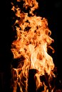 Flames of a campfire in the night Royalty Free Stock Photo