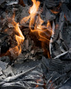 Flames in grey ashes Royalty Free Stock Photos
