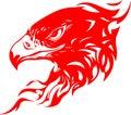 Ardor águila cabeza 1