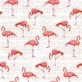 Flamingo Bird Background . Sea...