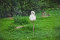 Flamingo bird image of white Royalty Free Stock Photos