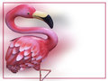 Flamingo card on white with border Stock Images