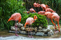 Flamingo family in Lisbon zoo, Portugal Royalty Free Stock Photo