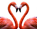 Flamingo Heart Stock Photo