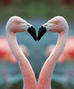 Flamingo heart Royalty Free Stock Photo