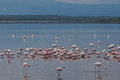 Flamingo on lake Royalty Free Stock Photos