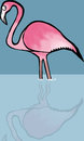 Flamingo pink standing in blue water Royalty Free Stock Images