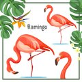 Flamingo poster with leaves and animals vector illustration Royalty Free Stock Photo