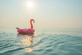 Flamingo In The Sea