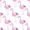 Flamingo seamless pattern. Pink exotic bird background.