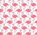 Flamingo vector illustration eps Stock Photography