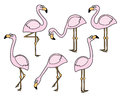 Flamingo vector set in a hand drawn cartoon style