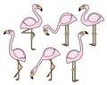Flamingo vector set in a hand drawn cartoon style