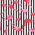 Flamingo watercolor silhouette pattern, black and white striped