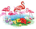 Flamingoes and arrangement from tropical flowers pink Stock Image