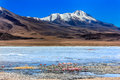 Flamingoes in laguna verde bolivia the most beautiful landscape Royalty Free Stock Images