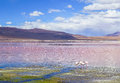 Flamingoes at red lagoon bolivia this photo was taken on feb in Royalty Free Stock Photos