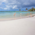 Flamingos on the beach Royalty Free Stock Photo