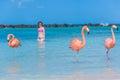 Flamingos beach. Aruba Royalty Free Stock Photo