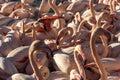 Flamingos , Camargue,France. Royalty Free Stock Photo