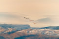Flamingos flying three over the mountains Stock Images