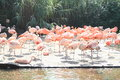 Flamingos having rest while standing on one leg Stock Photo