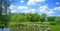 Flamingos pinnk on small lake Royalty Free Stock Images