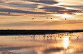 Flamingos at sunrise in camargue nature reserve france Royalty Free Stock Photography
