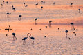 Flamingos in a sunset creek Royalty Free Stock Photo
