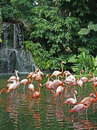 Flamingos & waterfall Stock Photo
