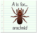 Flashcard letter a is for arachnid illustration Royalty Free Stock Images
