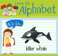 Flashcard letter K is for killer whale Royalty Free Stock Photo