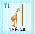 Flashcard letter T is for tall Royalty Free Stock Photo