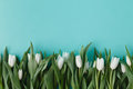Flat Frame From White Tulips O...