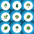 Flat Icon Ecology Set Of Tree, Wood, Park And Other Vector Objects. Also Includes Birch, Alder, Leaf Elements.