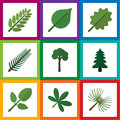 Flat Icon Natural Set Of Evergreen, Park, Alder And Other Vector Objects. Also Includes Acacia, Leaf, Tree Elements. Royalty Free Stock Photo