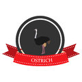 Flat icon ostrich with the name