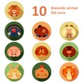 Flat icons with animals vector collection of of farm Royalty Free Stock Photos