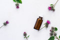 Flat lay  burdock  Essential oil In small bottle. Spikes of flowers and leaves on a white background Royalty Free Stock Photo