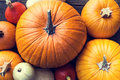 Flat lay lots of different sorts of pumpkins orange and yellow Royalty Free Stock Photos