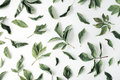 Flat lay pattern with green leaves and white flowers at white background Royalty Free Stock Photo